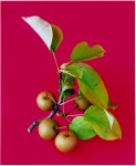 Fruit-01-2007