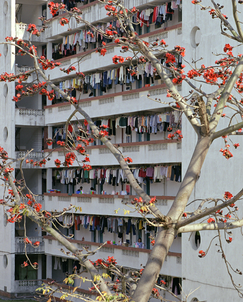 Xiada (Fruit Tree), Xiamen